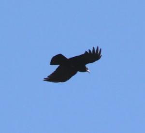 vuelo-de-ave
