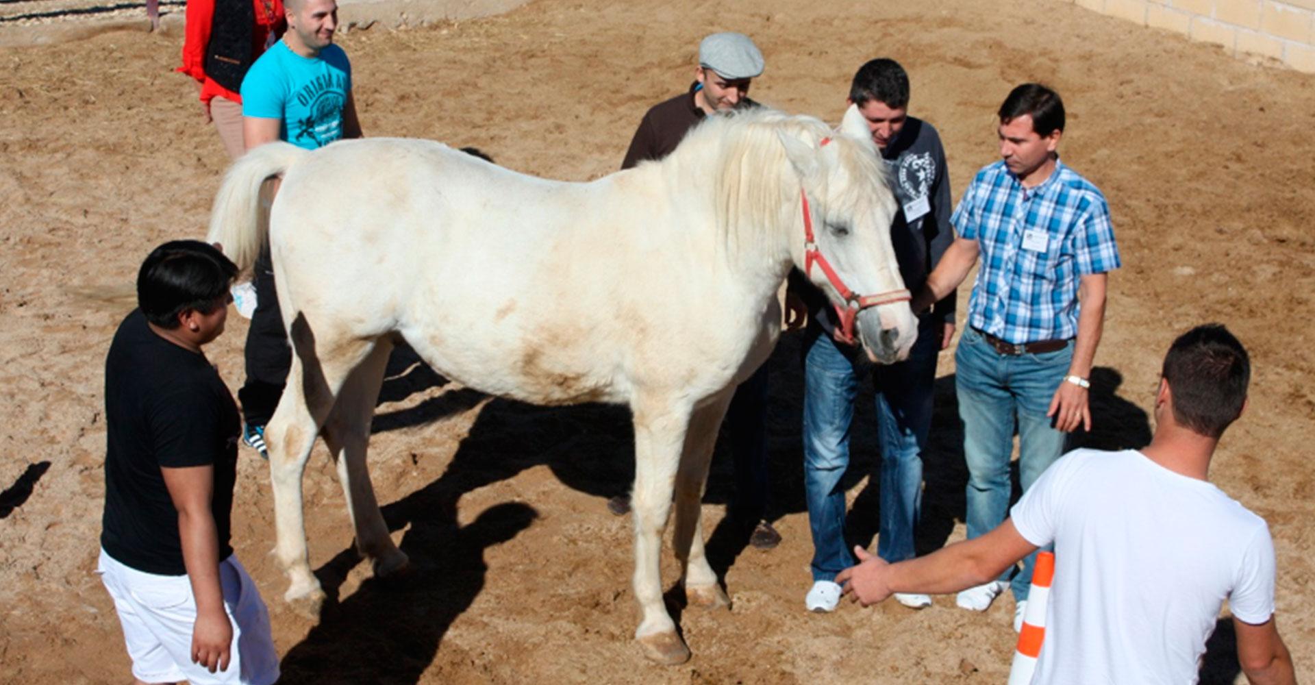 Coaching-con-caballos---El-poder-de-la-equinoemocionalidad-04